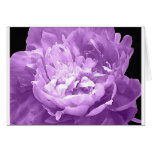 Hatched Purple Peony Greeting Card