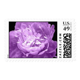Hatched Purple Peony Postage Stamp