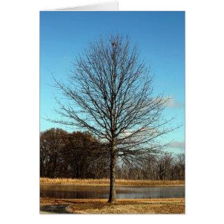 Hatchie Wildlife - Tree Greeting Card