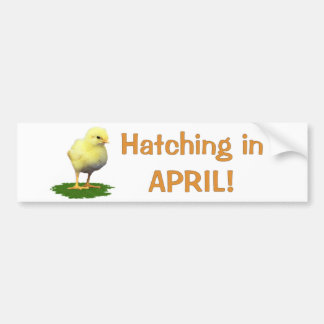 Hatching in April! Maternity/Pregnant Due In April Bumper Sticker