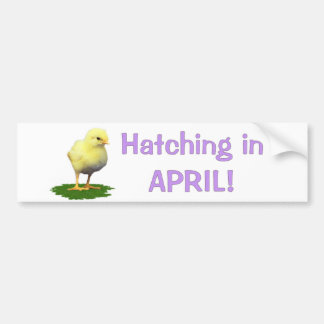Hatching in April Maternity Pregnant Due In April Bumper Sticker