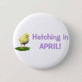 Hatching in April! Maternity/Pregnant Due In April Button