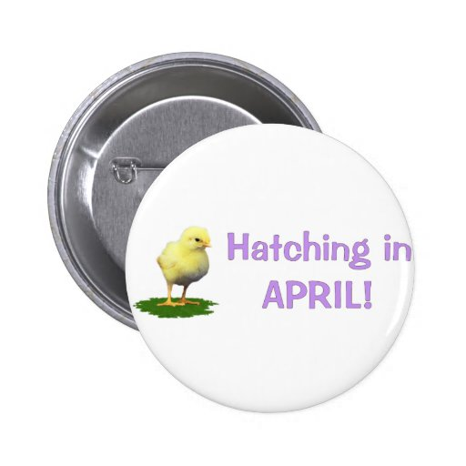 Hatching in April! Maternity/Pregnant Due In April Pinback Button