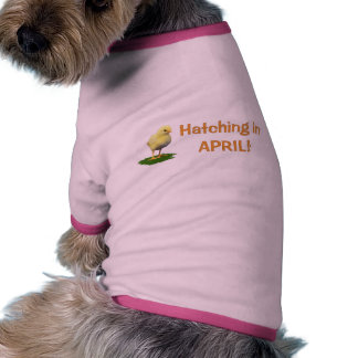 Hatching in April! Maternity/Pregnant Due In April Dog Shirt