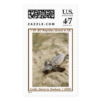 Hatchling de la tortuga de mar del necio timbre postal