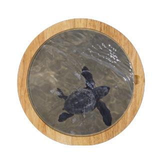 Hatchlings 2 de la tortuga