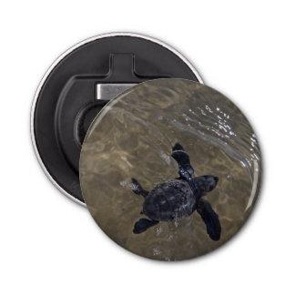 Hatchlings 2 de la tortuga abrebotellas redondo