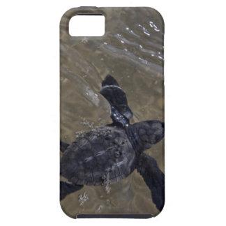 Hatchlings 2 de la tortuga funda para iPhone 5 tough