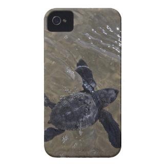 Hatchlings 2 de la tortuga iPhone 4 Case-Mate cobertura