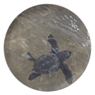 Hatchlings 2 de la tortuga plato de cena
