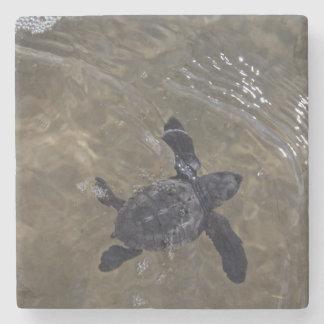 Hatchlings 2 de la tortuga posavasos de piedra