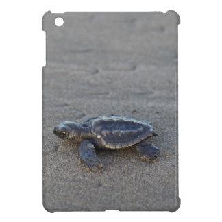 Hatchlings de la tortuga