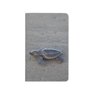 Hatchlings de la tortuga cuaderno grapado