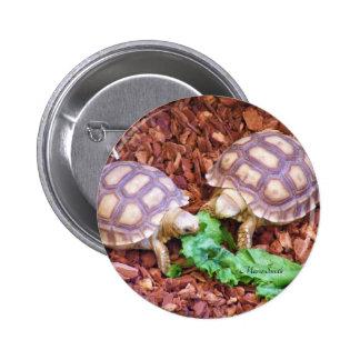 Hatchlings de la tortuga de Sulcata Pin