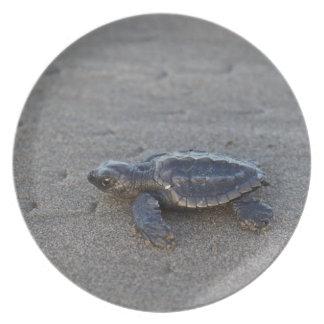 Hatchlings de la tortuga plato de cena