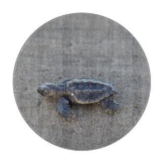 Hatchlings de la tortuga tablas de cortar