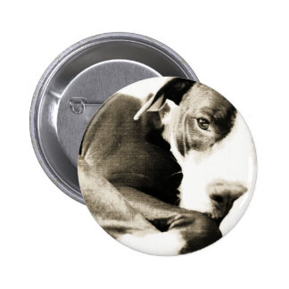 hate the deed not the breed pitbull pinback button