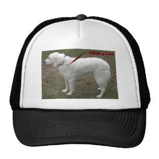 Hats with Dog Portraits