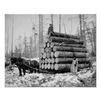 Hauling a Load of Logs, 1908. Vintage Photo Poster