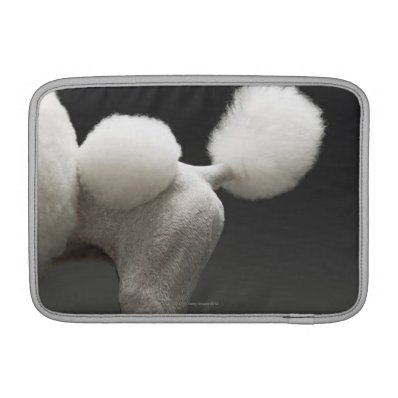 Haunches of Poodle, on grey background MacBook Sleeve
