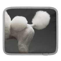 Haunches of Poodle, on grey background Sleeve For iPads