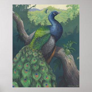 Haunt of the Peacock Print