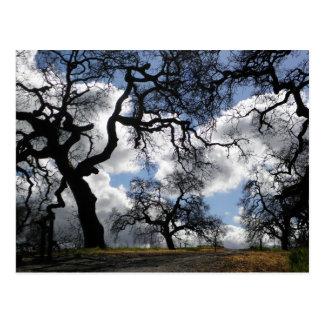 Haunted Trees Postcard