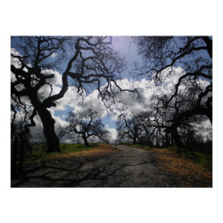 Haunted Trees Poster