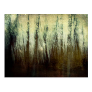 Haunted Woods Postcard