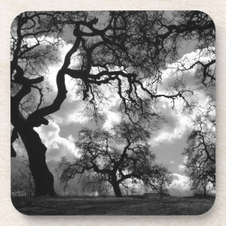 Haunting Black and White Trees Beverage Coasters