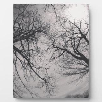 Haunting Trees Photo Plaque