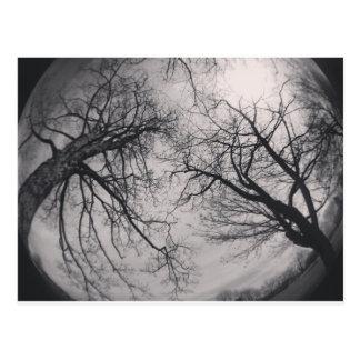 Haunting Trees Postcard
