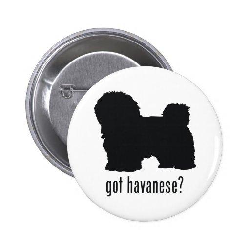 Havanese Pinback Button