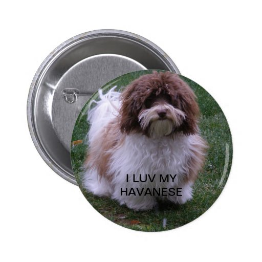 Havanese button