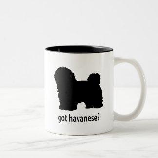 Havanese conseguido tazas de café