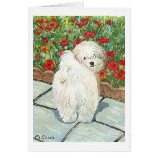 Havanese Dog and Poppies Art Print Cards