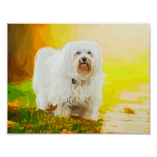 Havanese Dog Bichon Portrait Painting Poster