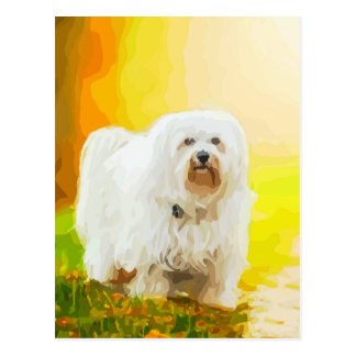 Havanese Dog Bichon Portrait Postcard