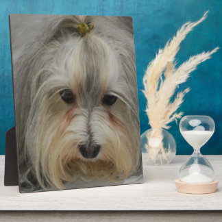 Havanese Dog Breed Plaques