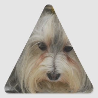 Havanese Dog Breed Triangle Stickers