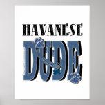 Havanese DUDE Print