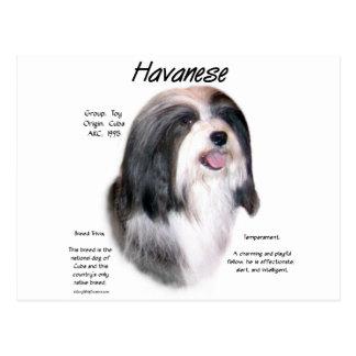 Havanese History Design Postcard
