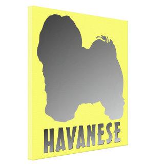 Havanese Impresión En Lona Estirada