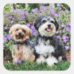 Havanese - Lola & Yorkie - Molly Square Sticker