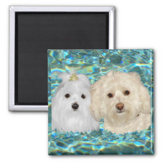 Havanese, Maltese on Turquoise Water 2 Inch Square Magnet
