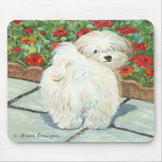 Havanese n Poppies Art Print Gifts Cards Mousepads