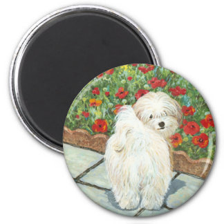 Havanese n Poppies Christmas Gifts and Cards Magnet