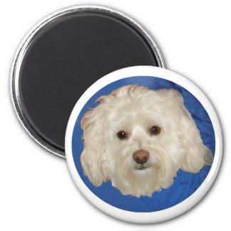 Havanese on Blue 2 Inch Round Magnet