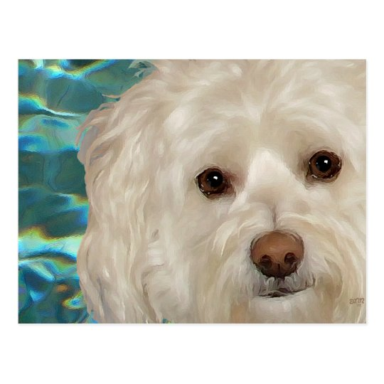 Havanese on Turquoise Water Postcard