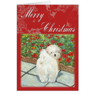 Havanese Poppy Christmas Gifts and Cards